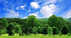 Prinsip Dasar Audit Lingkungan